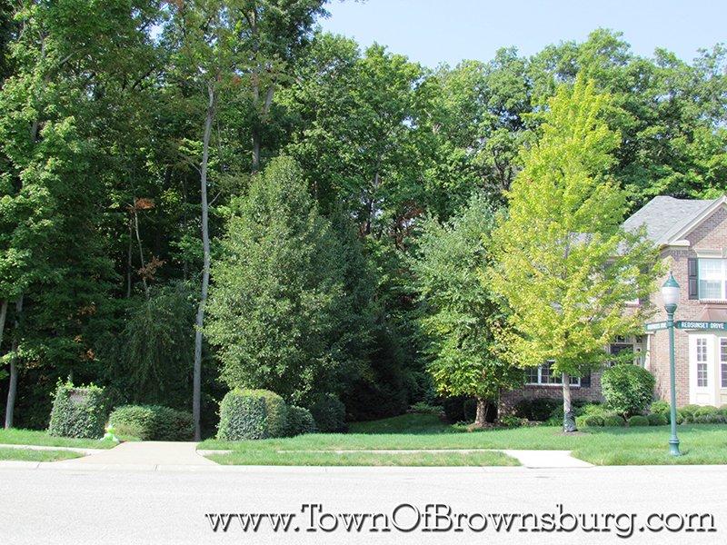 Arbor Springs, Brownsburg, IN: Wooded Lots