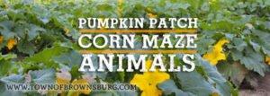 Hogan Farms Pumpkin Patch and Corn Maze