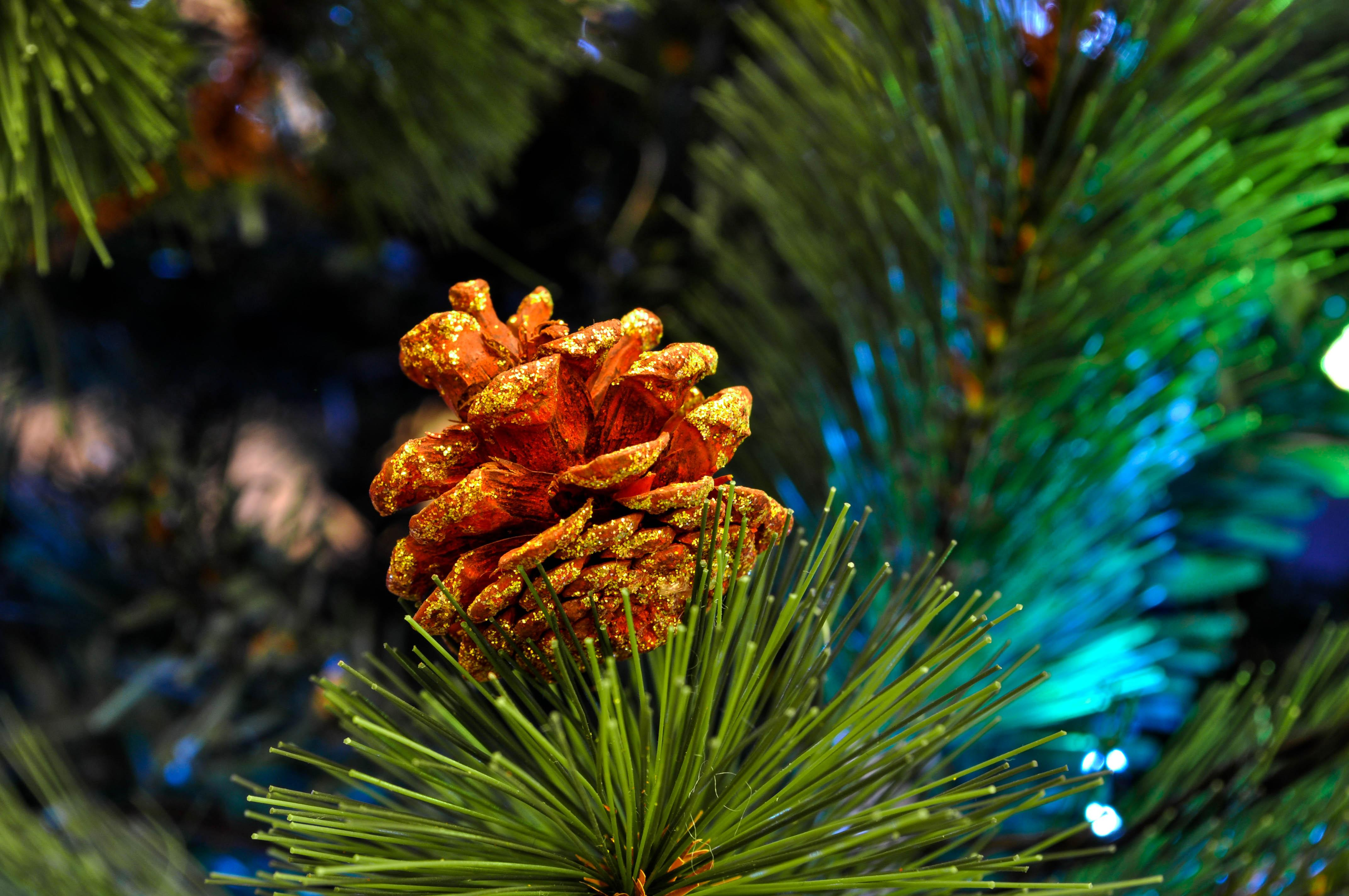 Christmas Tree Recycling Town Of Brownsburg Math Wallpaper Golden Find Free HD for Desktop [pastnedes.tk]