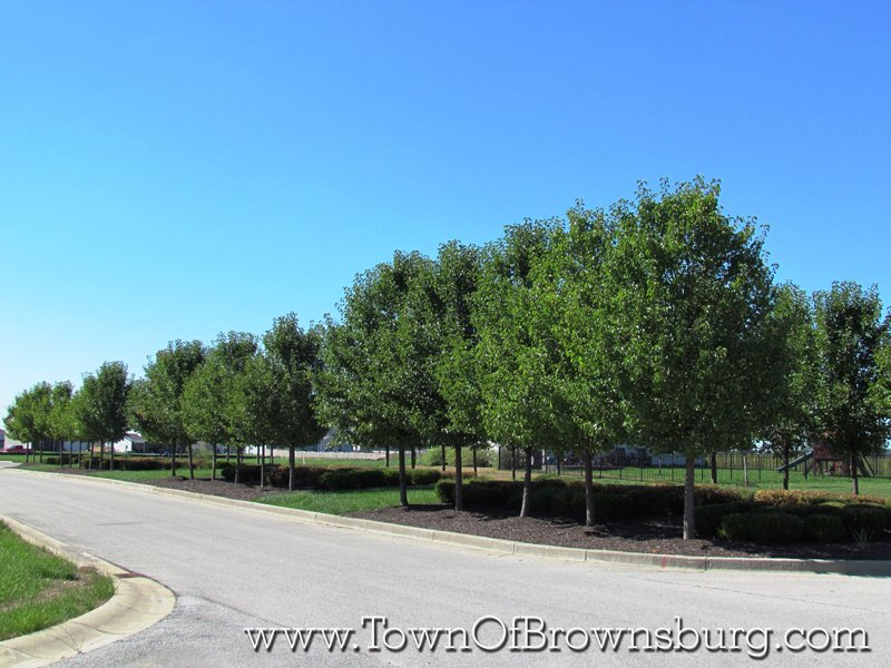 Wynne Farms, Brownsburg, IN: Residential Roadway