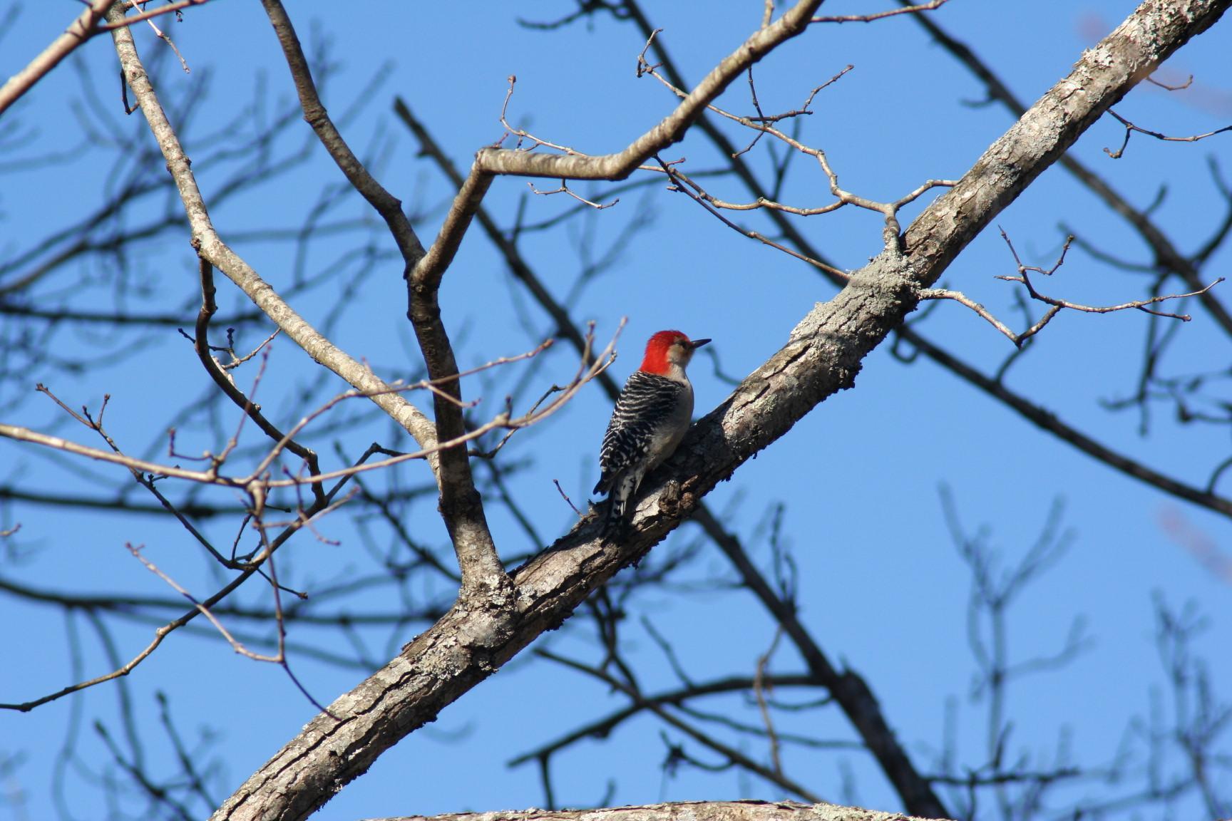 Winter Birding Town Of Brownsburg