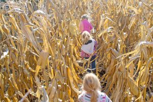 Autumn Festivities at Hogan Farms in Brownsburg